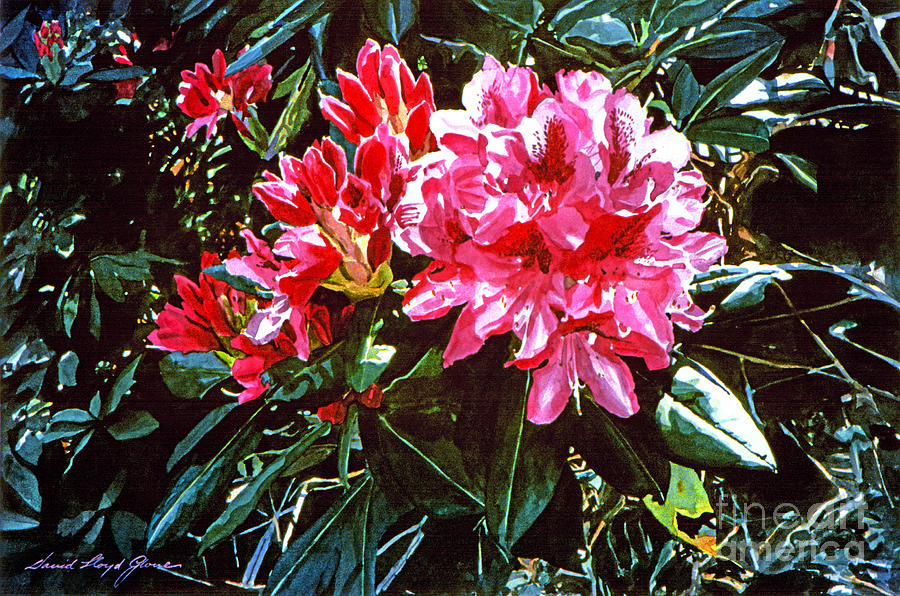 Flowers Painting - Fuschia Rhododendrons by David Lloyd Glover