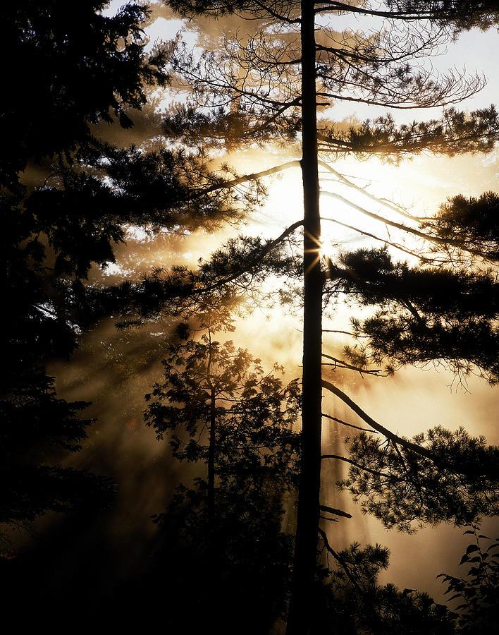 Branches Photograph - Fv5423, Perry Mastrovito Sunrise Though by Perry Mastrovito