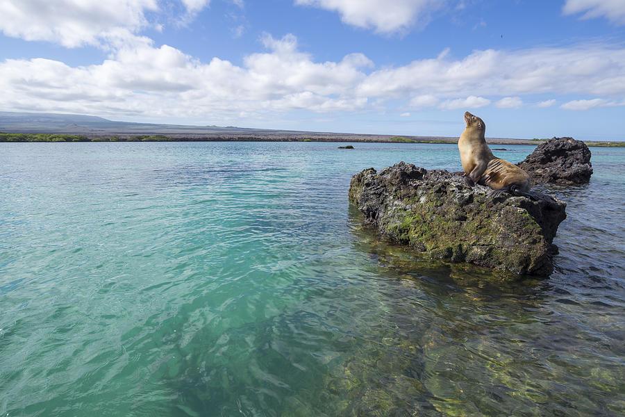 Galapagos Sea Lion Elizabeth Bay Photograph by Tui De Roy