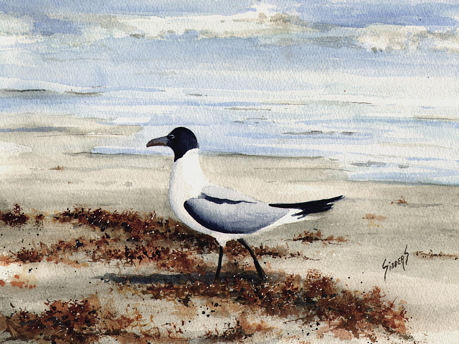 Gull Painting - Galveston Gull by Sam Sidders