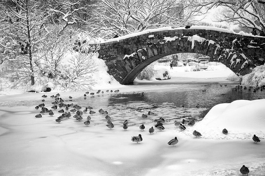 Landscape Photograph - Gapstow Bridge In Snow by Dave Beckerman