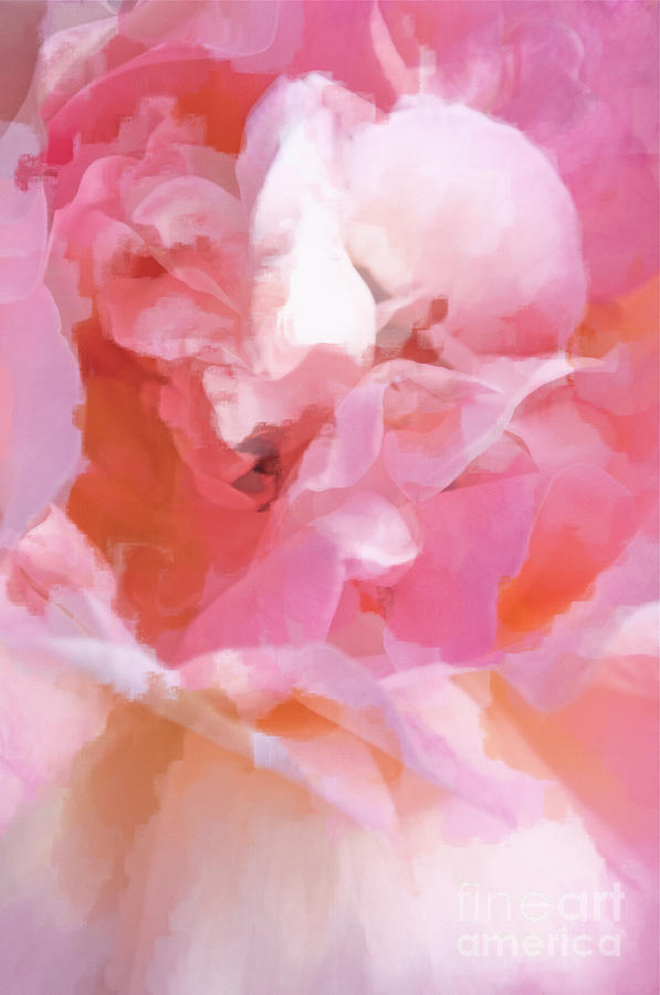 Rose Photograph - Garden Ballet by Gwyn Newcombe