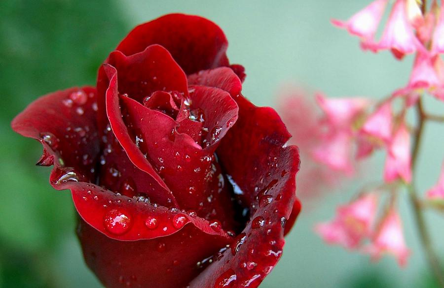 Flowers Photograph - Garden Bouquet by Steven Milner