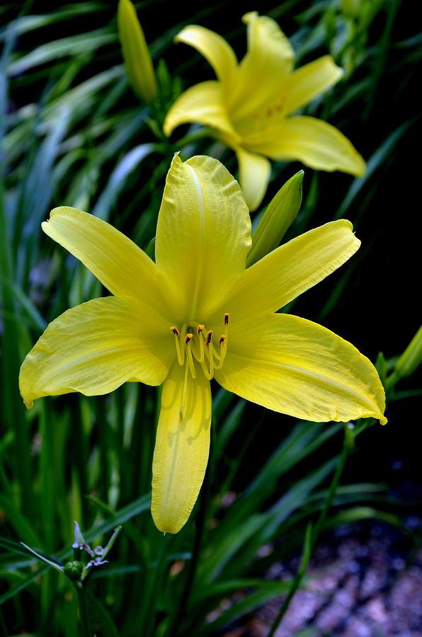 Garden Photograph - Garden Brilliance by Larry Jones