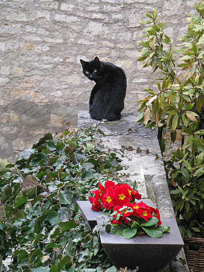Garden Cat by Sandy Scharmer