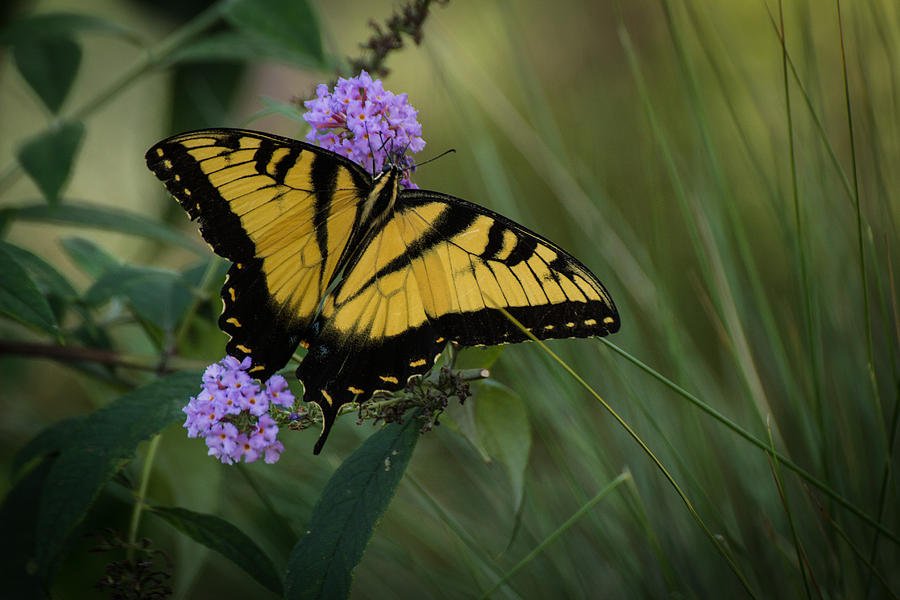 Butterflies Photograph - Garden Delight by Julie Andel