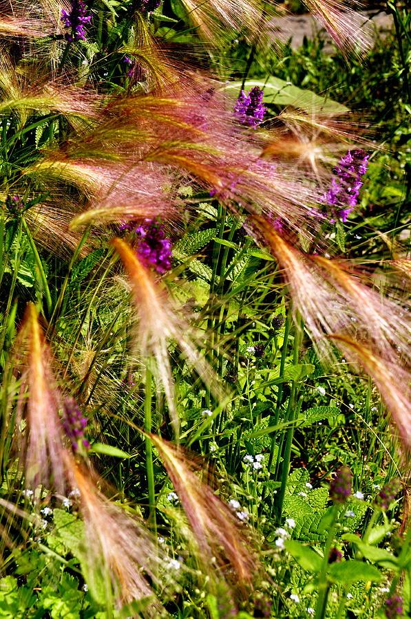 New England Photograph - Garden Flair by Caroline Stella