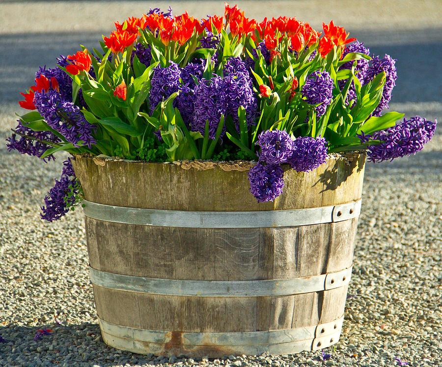 Garden Photograph - Garden In A Bucket by Eti Reid