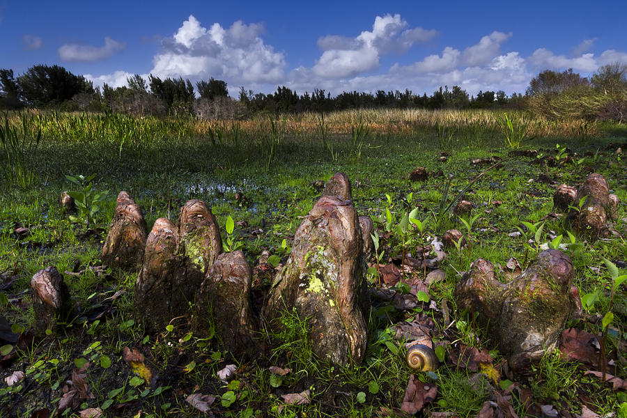 Clouds Photograph - Garden In The Glades by Debra and Dave Vanderlaan