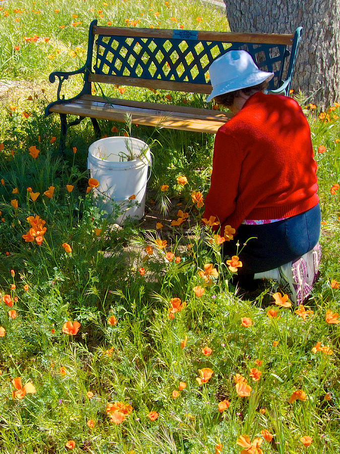 Garden Party Photograph - Garden Party In Park Sierra-ca by Ruth Hager