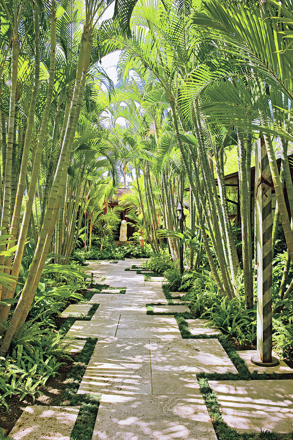 Garden Path And Palm Trees By Mary E Nichols