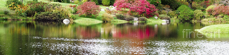 Beauty In Nature Photograph - Garden Pond by Oscar Gutierrez