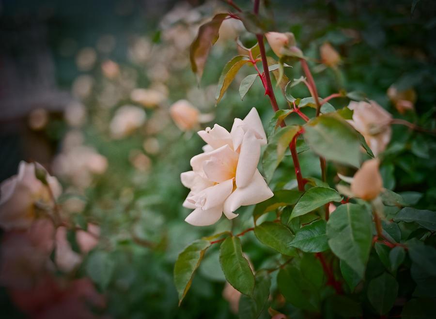 Flowers Digital Art - Garden Pride by Linda Unger