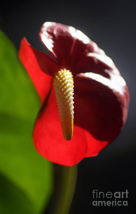 Flower Photograph - Garden Variety by Dan Holm
