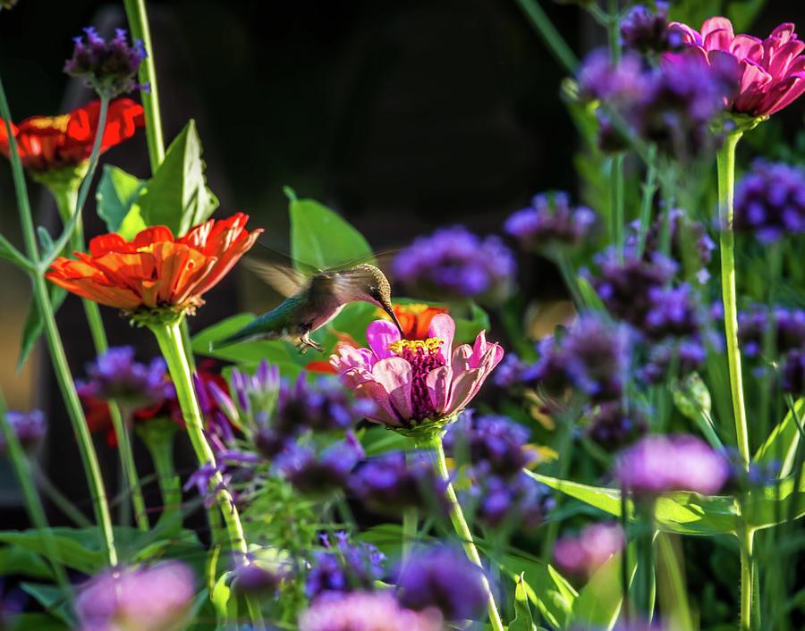 Garden Visitor Photograph by Straublund Photography
