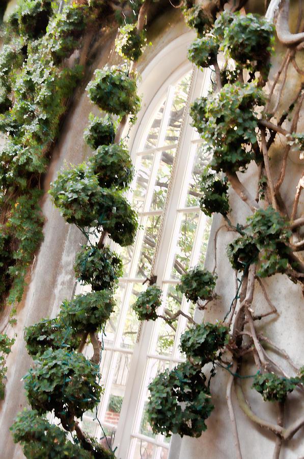 Garden Photograph - Garden Window by Elin Mastrangelo