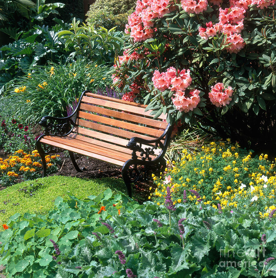 Plant Photograph - Garden With Bench by Hans Reinhard