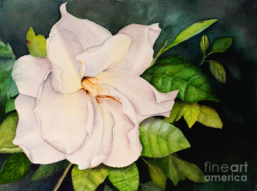 Gardenia Blossom by Jean A Chang