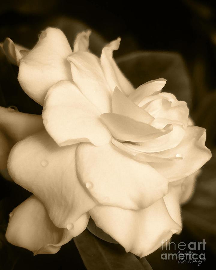 Gardenia by Lee Owenby