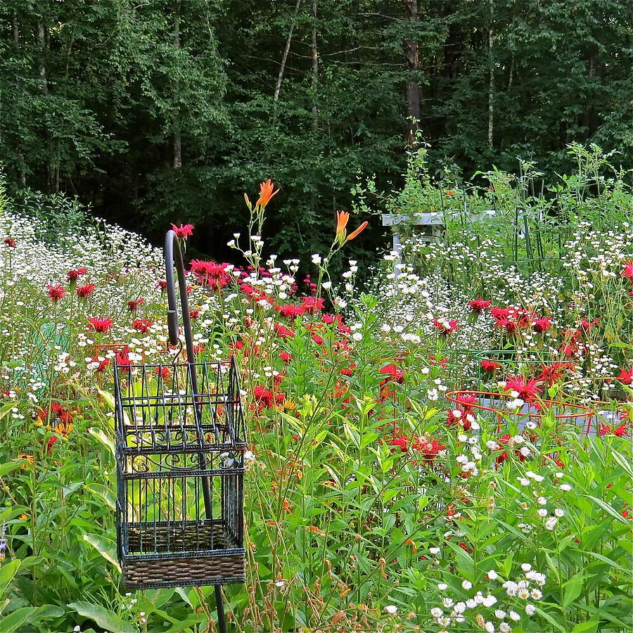 Garden Flower Photograph - Gardens 107 by Patsy Pratt