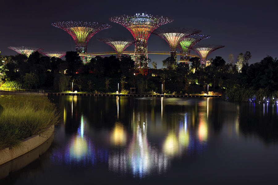 Gardens By The Bay Photograph - Gardens by the Bay Supertree Grove by David Gn