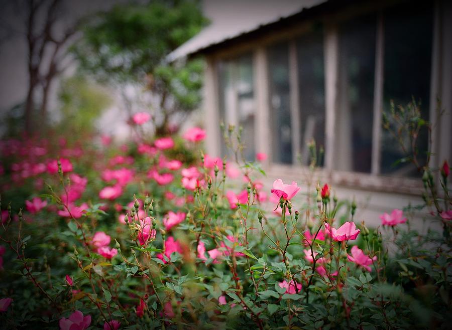 Flowers Digital Art - Gardens Of Pink by Linda Unger