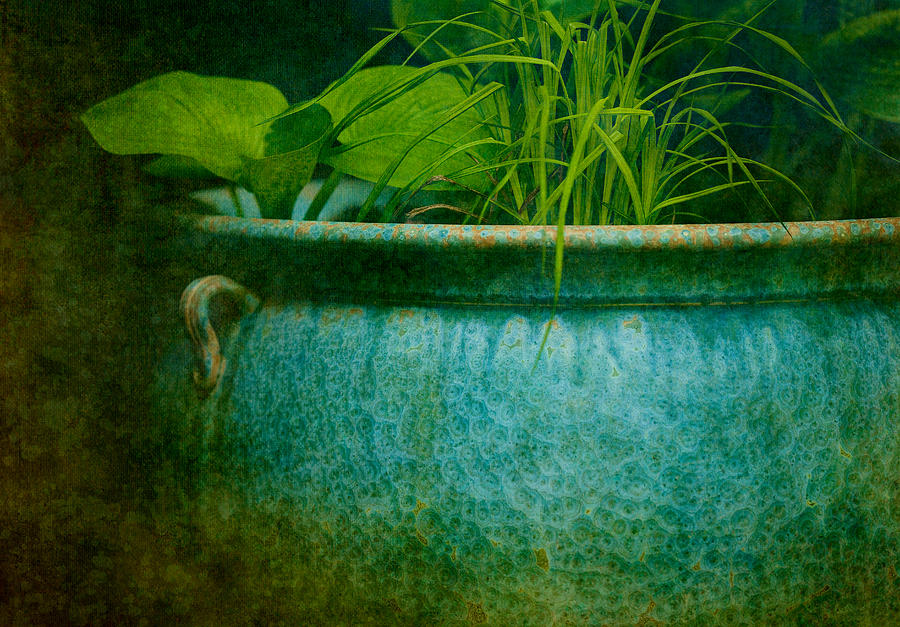 Pot Photograph - Gardenscape by Amy Weiss
