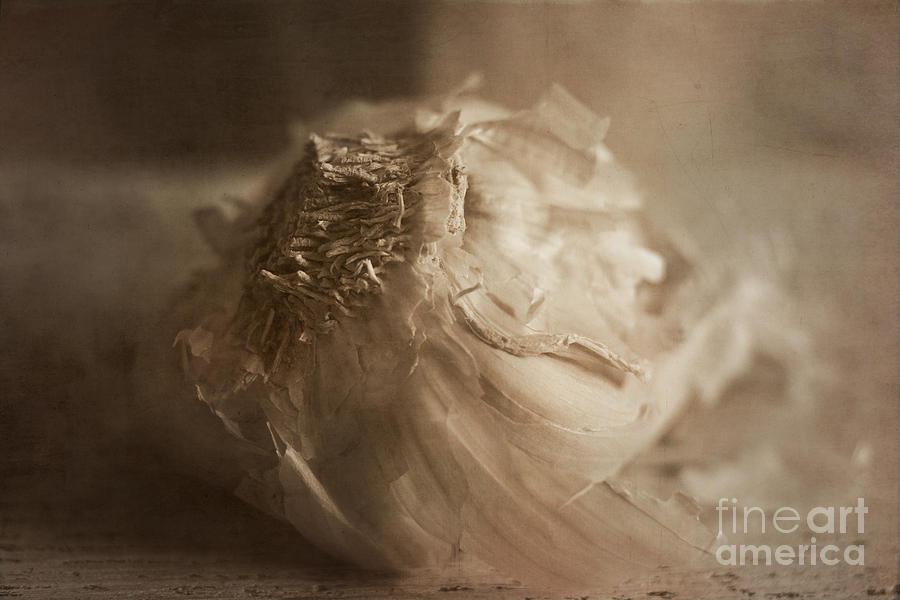 Garlic Photograph - Garlic 1 by Elena Nosyreva