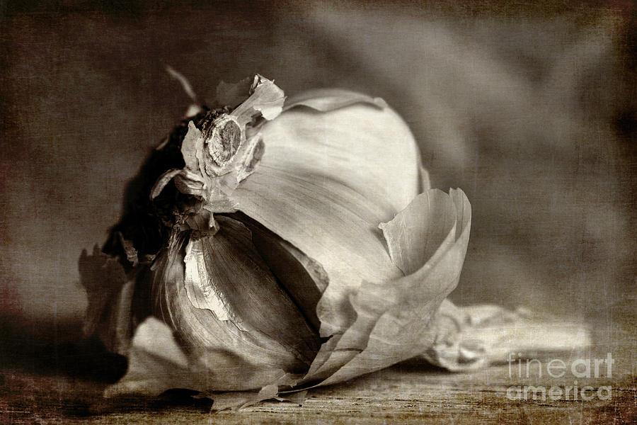 Garlic Photograph - Garlic 3 by Elena Nosyreva