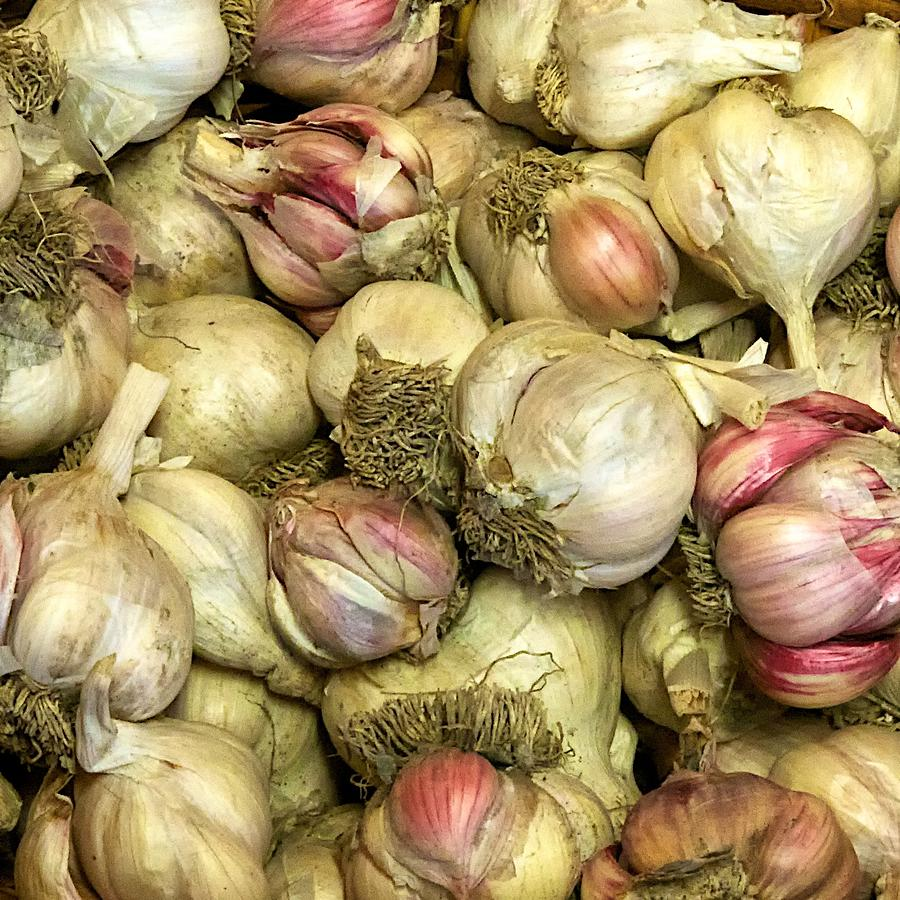 Garlic Photograph - Garlic by Tom Giske