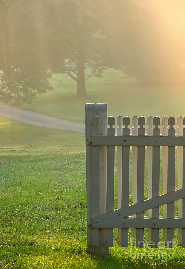 Garden Photograph - Gate In Morning Fog by Olivier Le Queinec