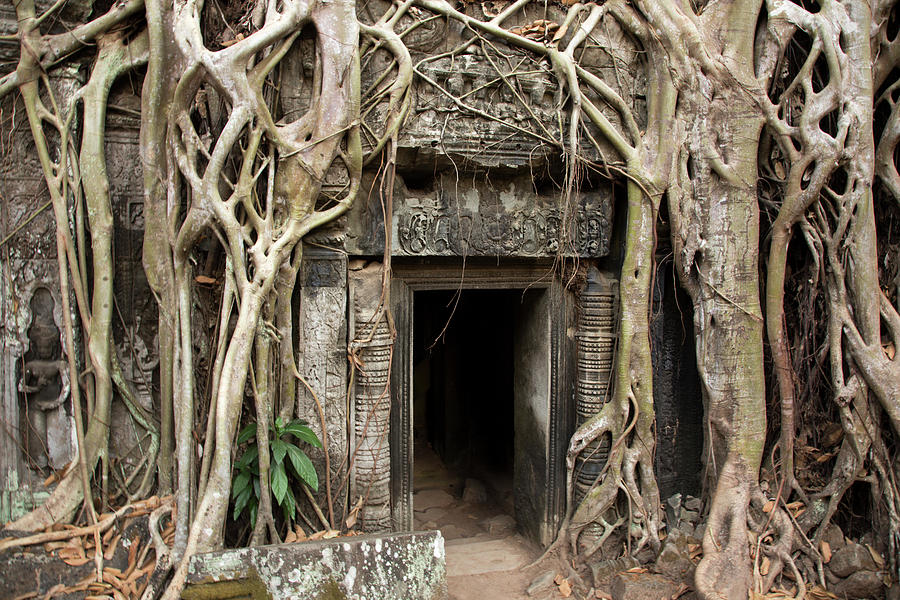Gates Embraced By Jungle, Ta Prohm Photograph by Pawel Toczynski