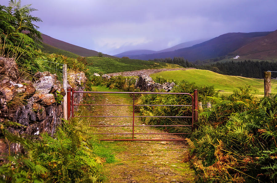 Multicolored Carpet Of Wicklow Hills. Ireland Photograph ... |Wicklow Hills Ireland
