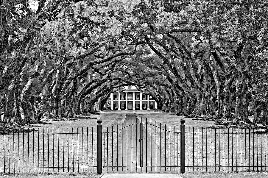 Oak Alley Plantation Photograph - Gateway To The Old South Bw by Steve Harrington