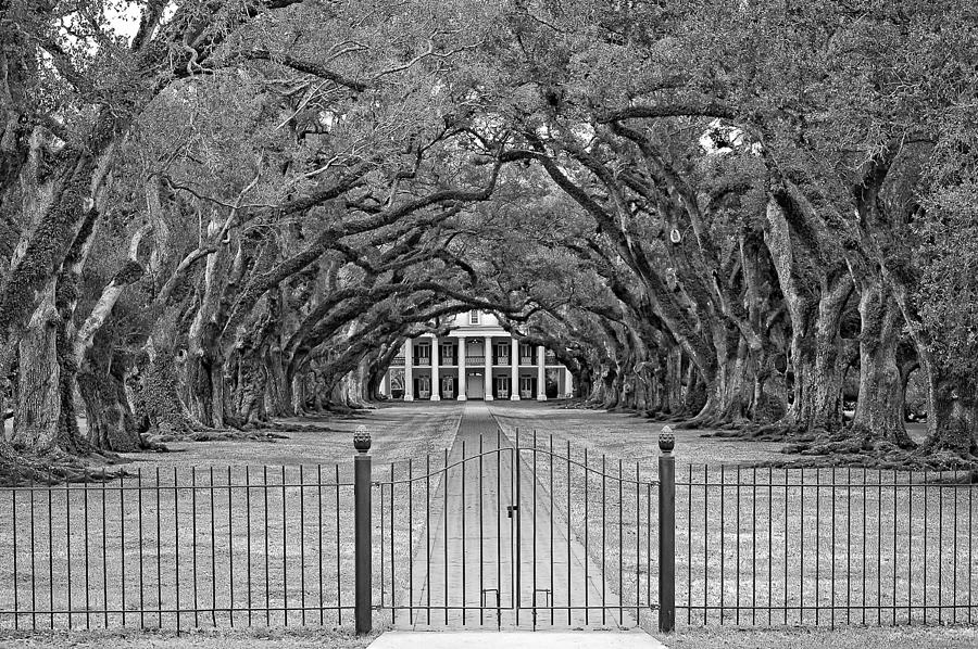 Oak Alley Plantation Photograph - Gateway To The Old South Monochrome by Steve Harrington