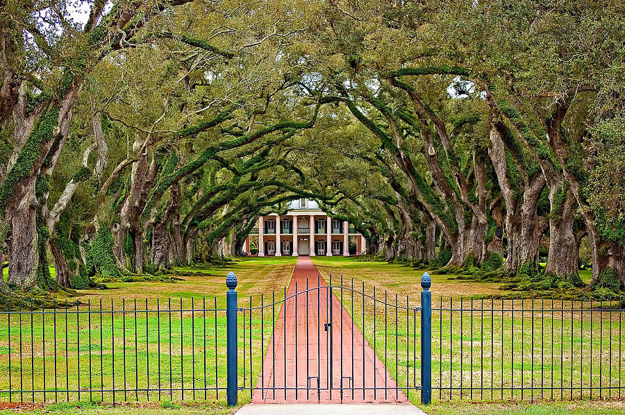 Oak Alley Plantation Photograph - Gateway To The Old South by Steve Harrington
