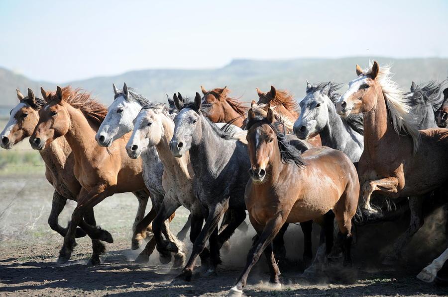 Horses Photograph - Gathering Horses by Lee Raine