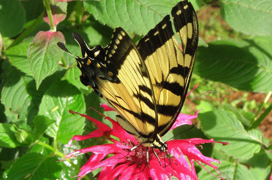 Flower Photograph - Gathering Nectar by Kim Galluzzo Wozniak