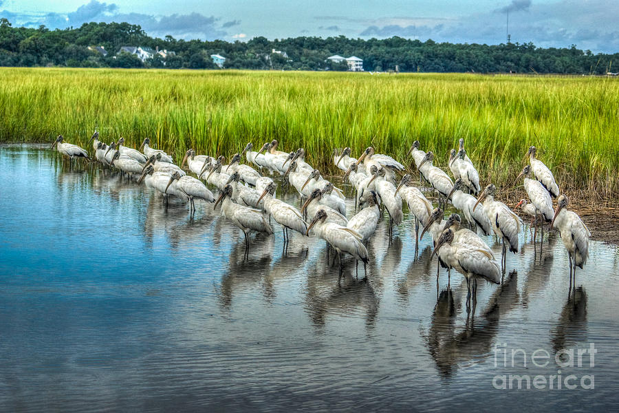 Nature Photograph - Gathering Wood Storks by Matthew Trudeau