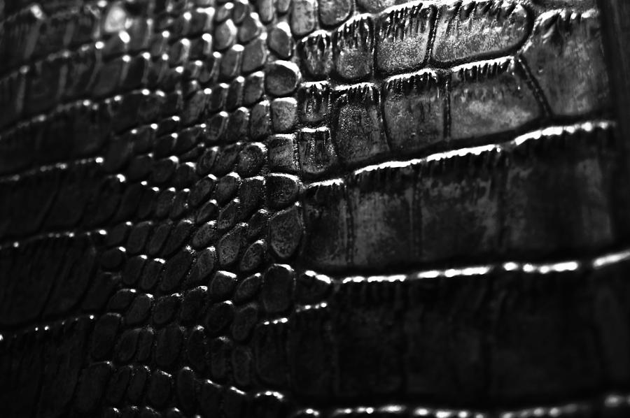 Abstract Photograph - Gator by Anthony Cummigs