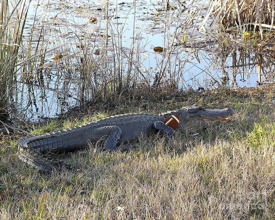 Alligator Photograph - Gator Football by Al Powell Photography USA