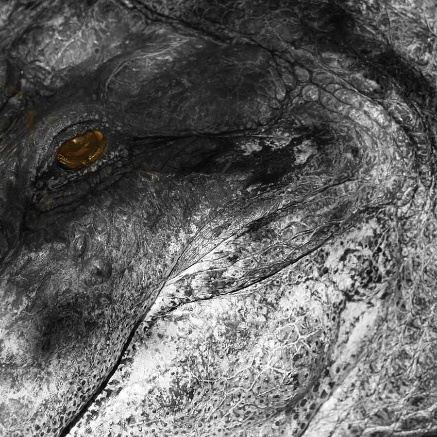 Gator Jaw Photograph