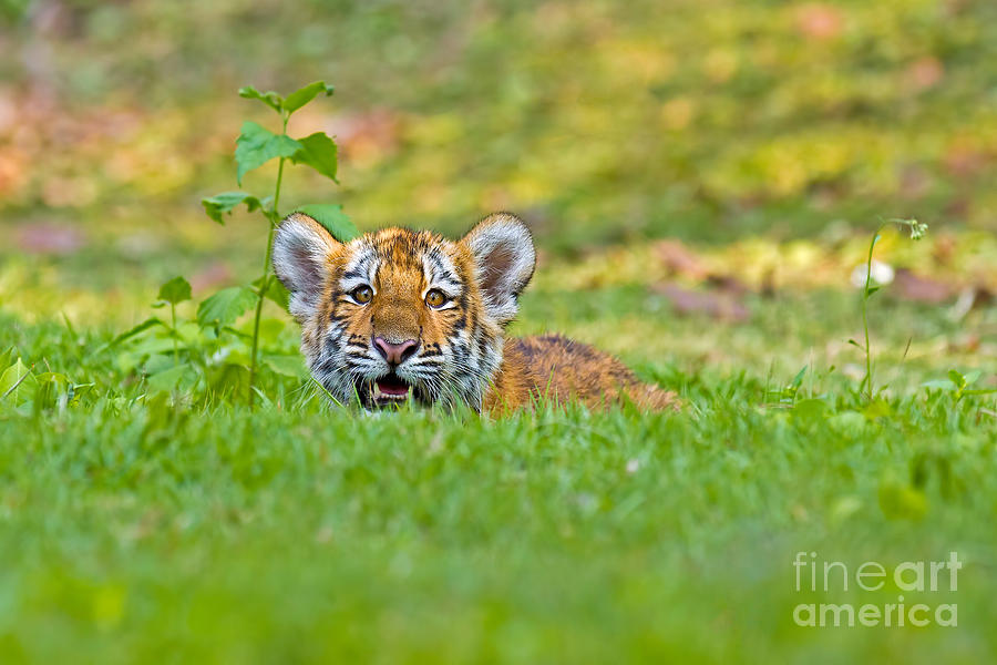 Thailand Photograph - Gauging The Distance by Ashley Vincent