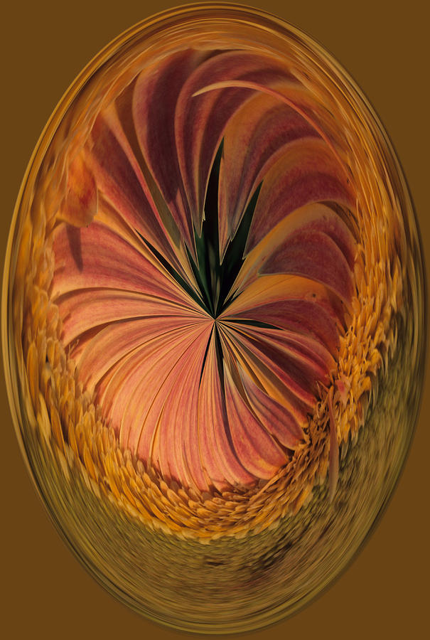 Gazania Umber Abstract  Photograph by Keith Gondron
