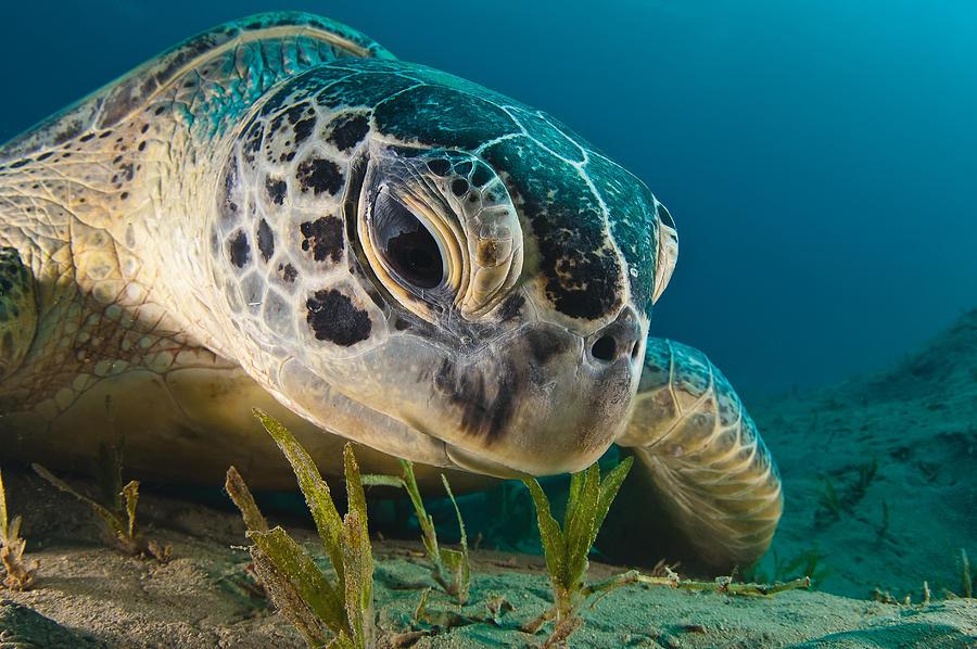 Turtle Photograph - Gaze by Dmitry Marchenko