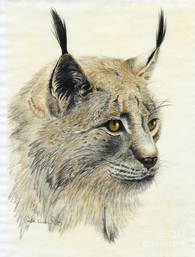 Animal Painting - Gazing Lynx by Phyllis Howard