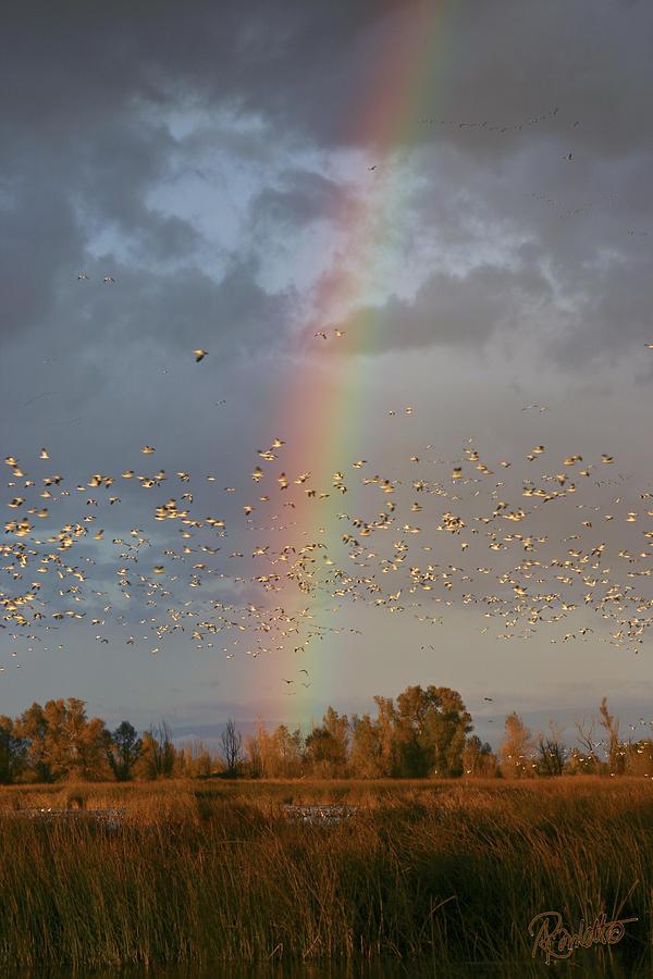 Geese and Rainbow by Ann Ranlett