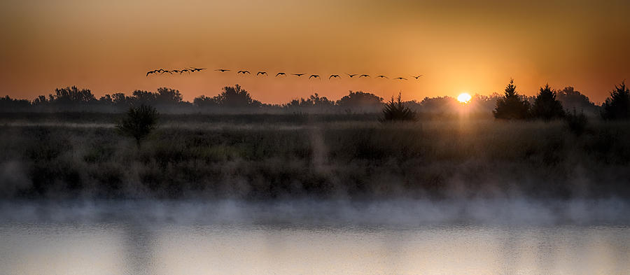 Birds Photograph - Geese At Sunrise by Garett Gabriel