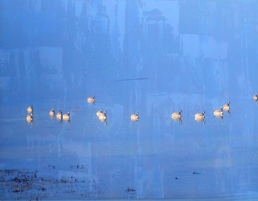 Sea Photograph - Geese Galore by Lyn  Perry