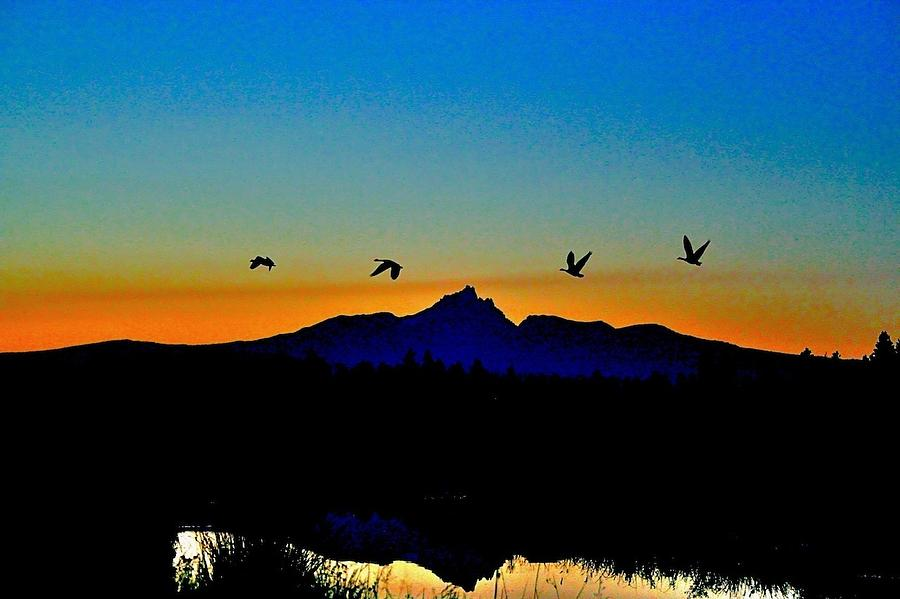 Oregon Photograph - Geese in Flight by Catia Juliana